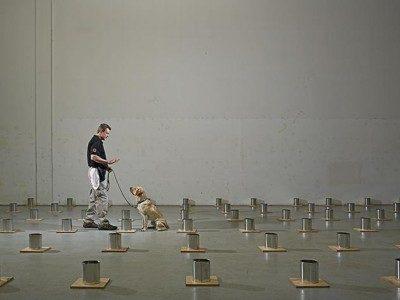 Bombhund i träning