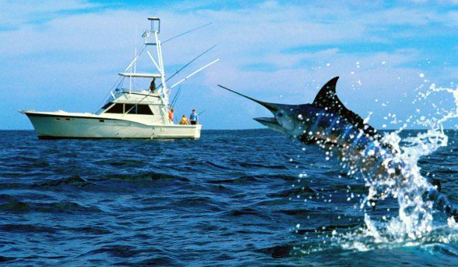 svärdfisk-attackerar-fiskare