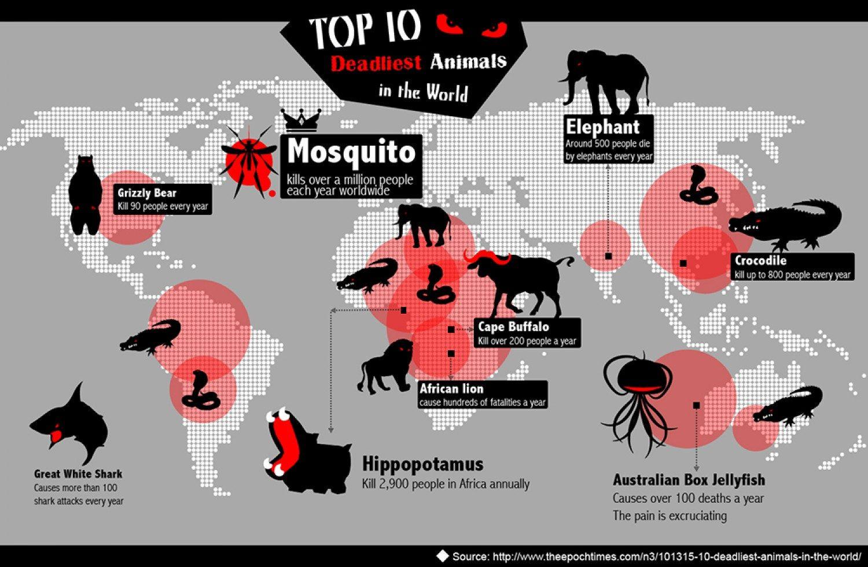 de-10-farligaste-djuren