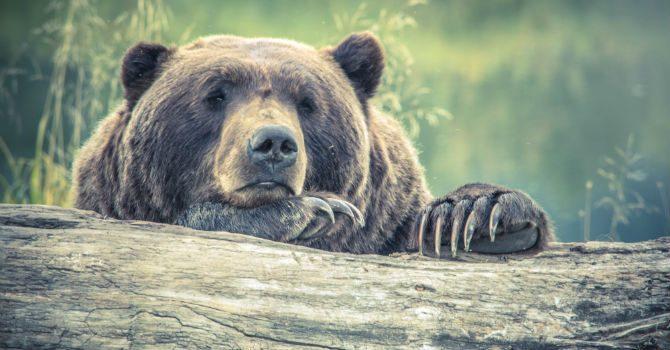 farligaste djuren i världen björn