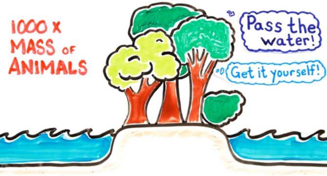 kan-växter-tänka