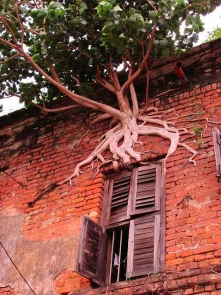 Roliga träd