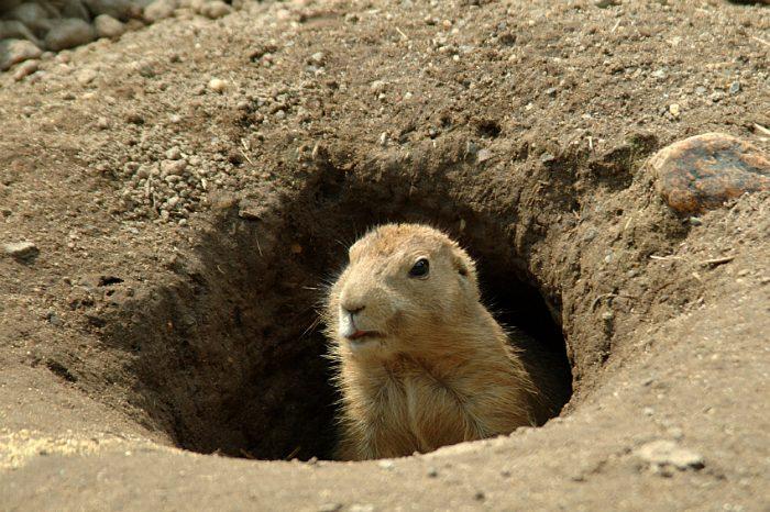 groundhog day sverige