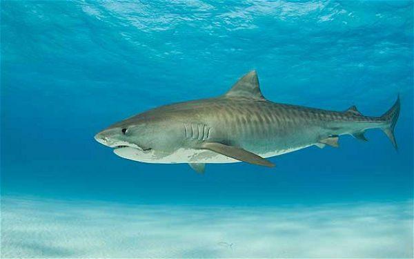 hur skyddar man sig mot hajar