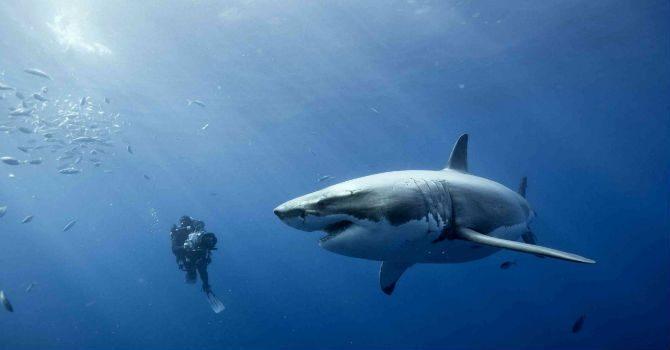 skydda sig mot hajar