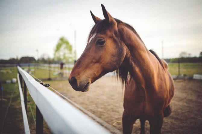 Är Människan Gjord För Att Springa Hästar