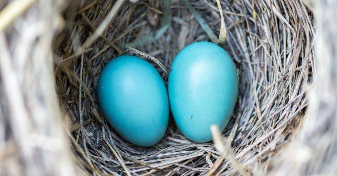 Varför får Man Blue Balls och vad är blue balls