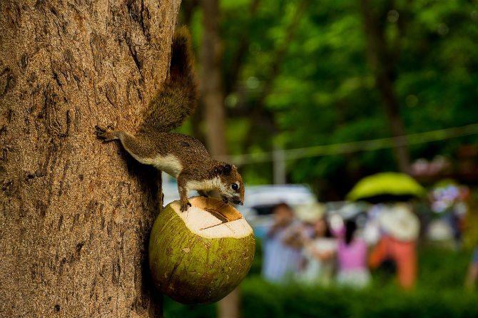 är kokosolja nyttigt att äta