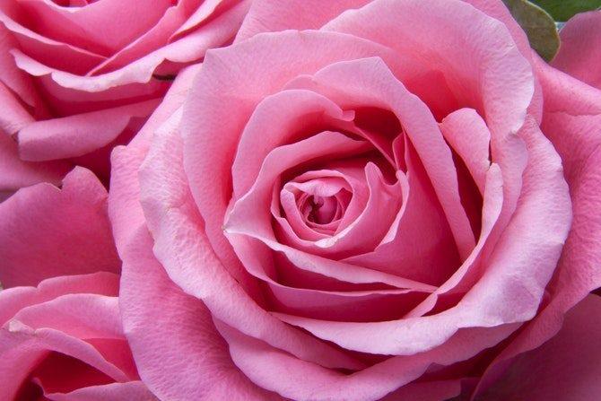 färgers betydelse rosa