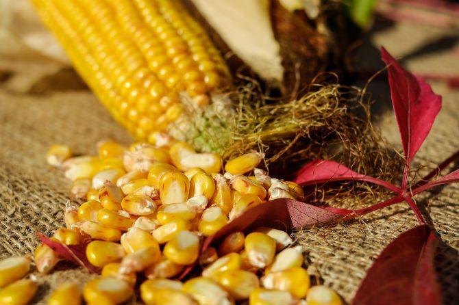 grönsaker med mycket protein majs