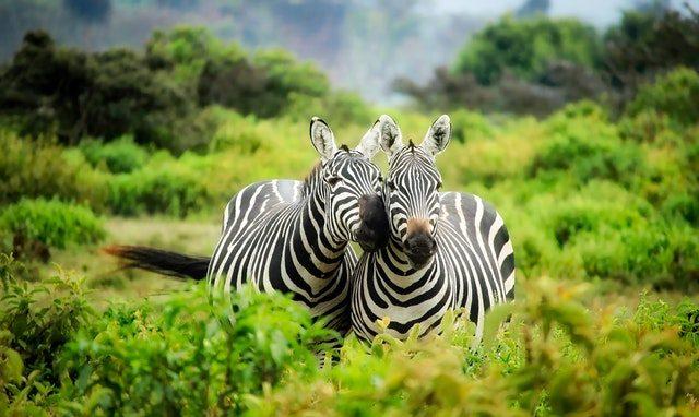 spektakulara resor safari